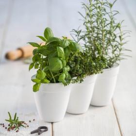 Ghiveci triplu alb Keter Ivy Herbs 2.5 L