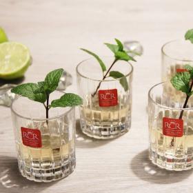 Set 6 pahare lichior RCR Timeless 80 ml